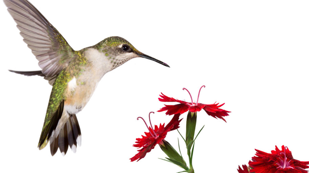 site-merch-bird-sample-08